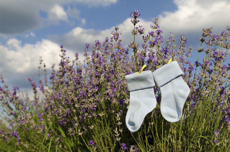 Socks hanging on flowers during sunny day