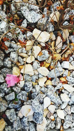 Eye4photography  #Plants EyeEm Selects EyeEm Gallery EyeEm EyeEm Best Shots Stone Rawmaterials Raw Material Stone Material Stone Tile حصى Pink Color Leaves🌿 Ground Stone Tile Rock Soil Shell Pink Leaf Vein Leaves