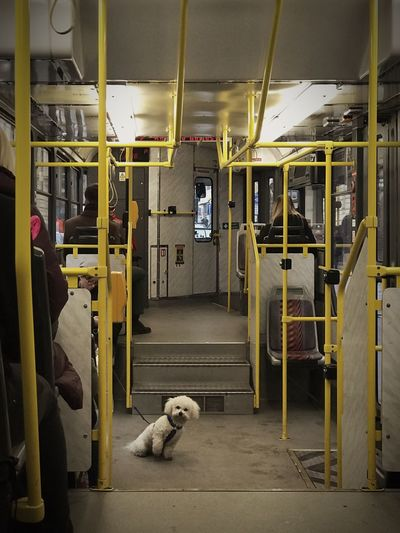 back to the future Canine Dog No People Toy Rail Transportation Animal Themes Capture Tomorrow One Animal Transportation Animal Domestic Animals Mode Of Transportation Pets Public Transportation Seat Teddy Bear Indoors
