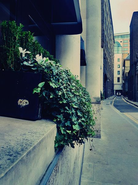 EyeEmNewHere No People Day Outdoor Photography London Steakhouse Co. Liverpool St Secret Streets Architecture Columns Urban Photography