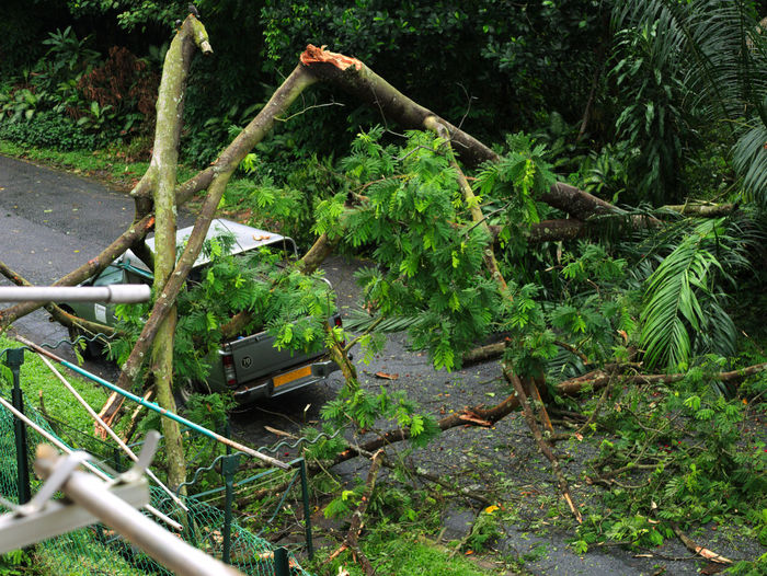 Cyclone Cyclone Nature's Fury Tree Fallen By The Strong Wind Typhoon Broken Tree Crushed Green Color Nature Tree Tree Over A Truck