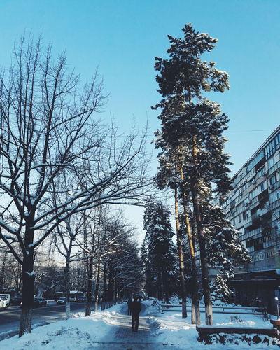 Tree Sky Clear