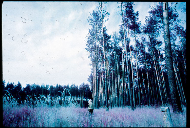 Trees in forest against sky during winter