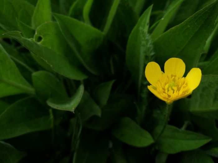 Flower Leaf Plant Yellow Petal Green Color Flower Head Beauty In Nature Nature Living Organism Growth No People Close-up Freshness Outdoors Fragility Day
