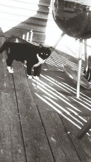 Cat Nonose Outside Whiteandblack picked up stray enjoying his new home