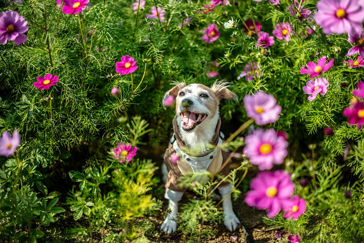 Dog with pink flowers