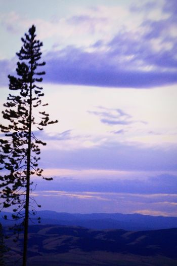 Big Sky Country Montana Minning Claim Forest Taking Photos USA Camping EyeEm Nature Lover Beautiful