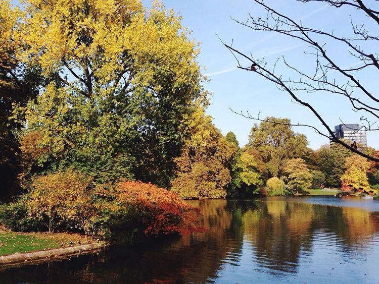 Golden October in Germany Golden Autumn Autumn Autumn Colors Beauty In Nature Nature Nature Photography Beautiful Nature Goldener Oktober Goldener Herbst Nature Colors No People