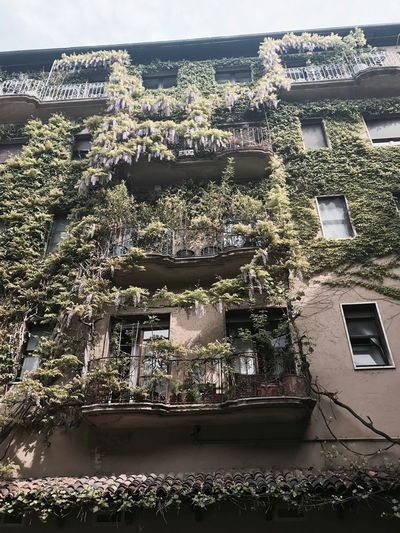 Architecture Built Structure Building Exterior House No People Day Window Residential Building Plant Outdoors Residential  Tree