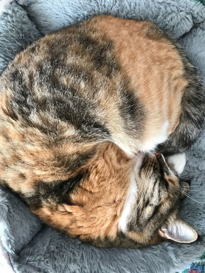Cat One Animal Relaxation Pets Mammal Domestic Animals Animal Animal Themes Domestic Sleeping Canine Dog Animal Body Part Close-up Eyes Closed  Indoors  Furniture High Angle View Vertebrate Resting No People