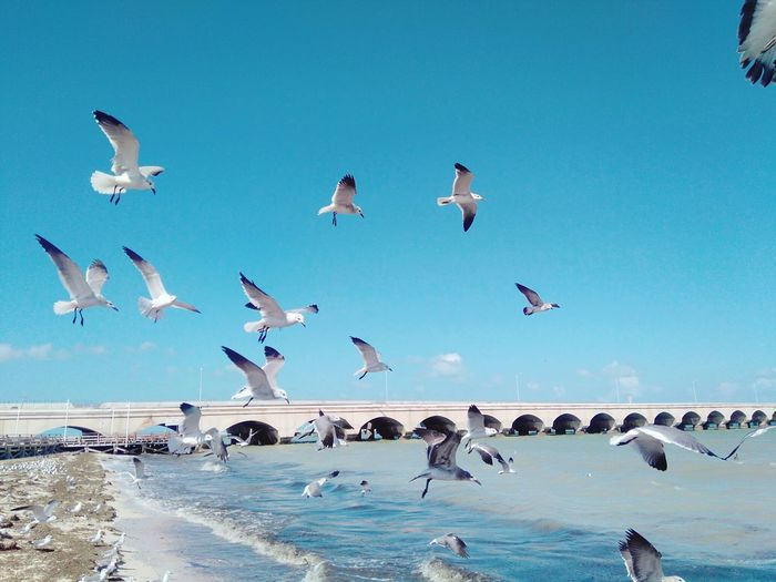 Birds Flying Over Sea Against Blue Sky