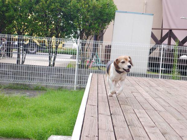 Mydog Run !!