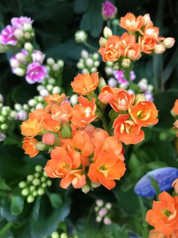 Flowering Plant Flower Plant Vulnerability  Fragility Freshness Beauty In Nature Close-up Flower Head Nature Growth No People