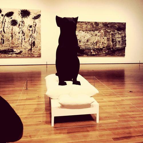 Pets Indoors  Domestic Cat Domestic Animals Hardwood Floor Animal Themes Sitting No People One Animal Mammal Day