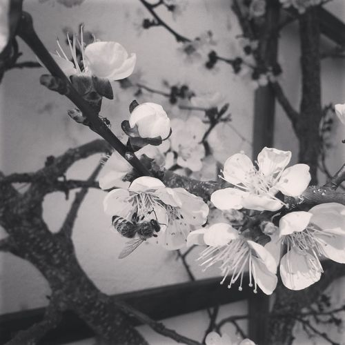 Beautiful Nature Animal Flowers Monochrome