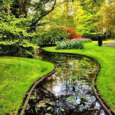Amazing gardens in #keukenhof #holland #jj #ubiquography #flower #jj_forum #dutch #igersholland #tulipfieldsexperience Tulipfieldsexperience Flower Holland Tulips Dutch Jj  Keukenhof Jj_forum Ubiquography Igersholland Theflowerofgardens