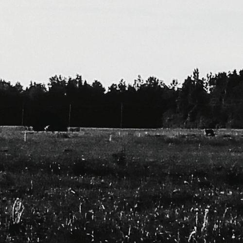 Blackandwhite Nature Deers Deer Wild Life Wild Life Photograph Blackandwhitetree Blackandwhitetrees