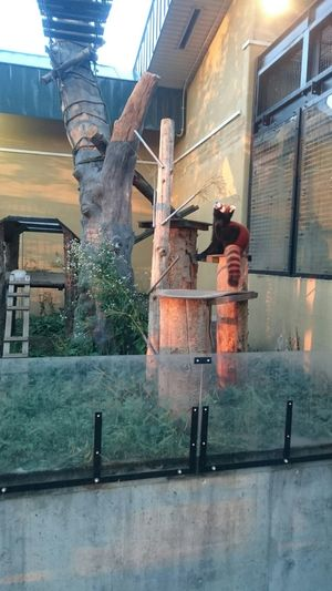 2年記念日 旭川 動物園