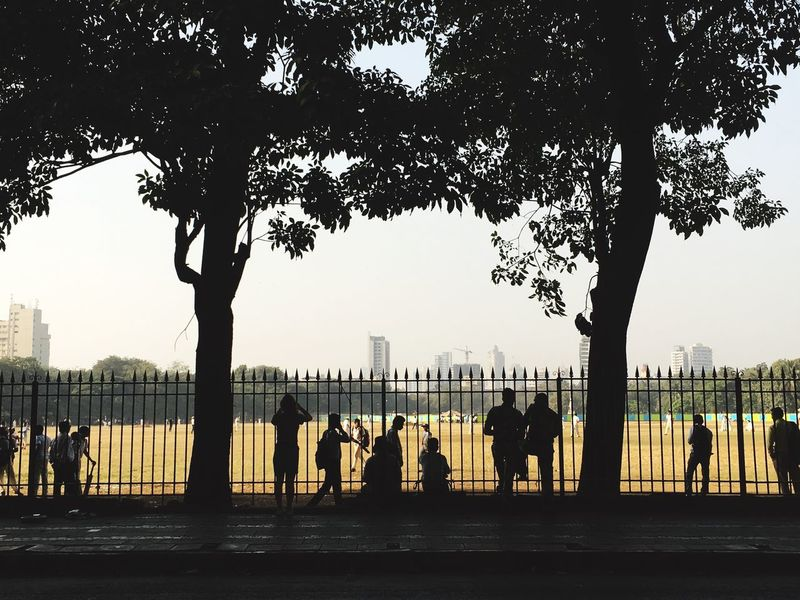 Cricket Field Tree Real People Men Silhouette Outdoors Women City Sky Nature Architecture Day People