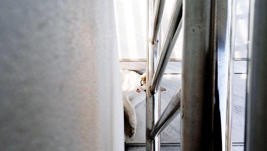 Close-up of cat looking through walls