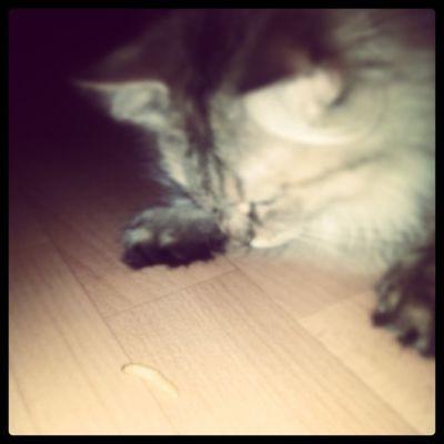 Cat Cute Love My littlebaby