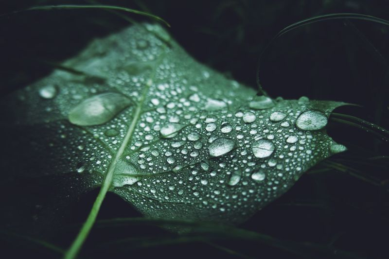 RainDrop Drop Close-up Water Leaf Plant Part Wet Plant Green Color No People Freshness Vulnerability  Selective Focus Dew Day Beauty In Nature Nature Purity Growth Fragility Outdoors