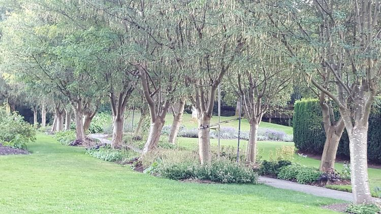 """Beautiful """"scene"""" of a tree lined walkway at VanDusen Botanical Garden...so serene, peaceful, and beautiful Trees Walkway VanDusen Garden Vancouver BC Beautiful Nature Photography Beauty In Nature Beautiful View Beautiful Place Heavenly Peaceful Place Serenity Serene Tranquil Outdoors"""