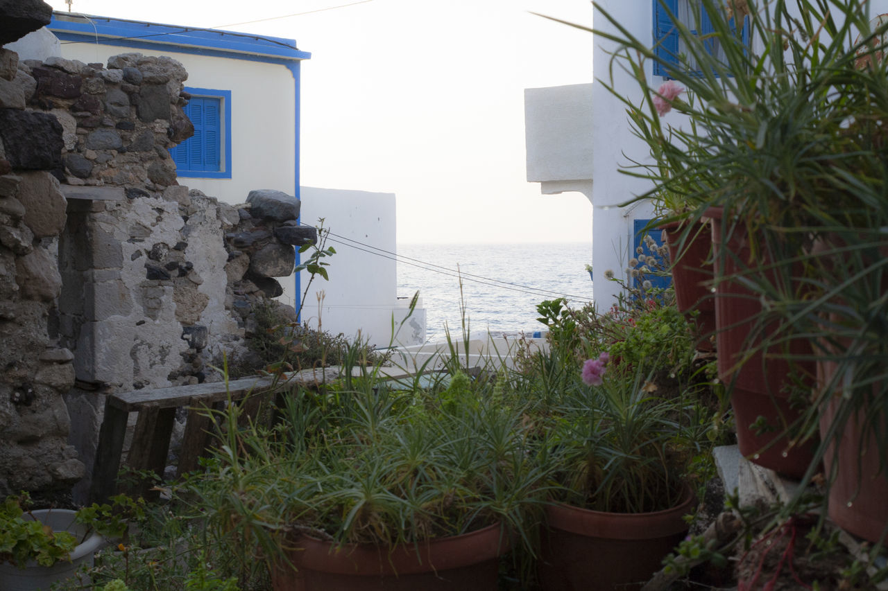 POTTED PLANTS BY SEA AGAINST BUILDINGS