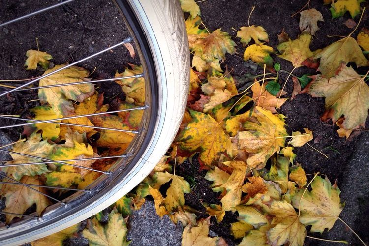 Bike tire on autumn leaves. Taking Photos Check This Out Bike Tires Wheels Autumn Autumn Leaves Leaves