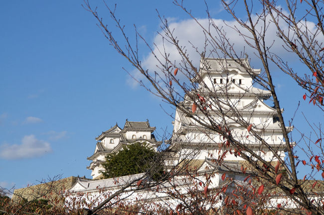Himeji Castle in Autumn Architecture Beauty Blue Sky Autumn Castle Red Leaves Branches Japan Japanese Culture White Heron Himeji No People Castle View  Hyogo Himeji-jo Castle Famous Place Cloud - Sky Building Exterior Built Structure White Colour Landmak Himeji Castle Low Angle View White Color Beautiful