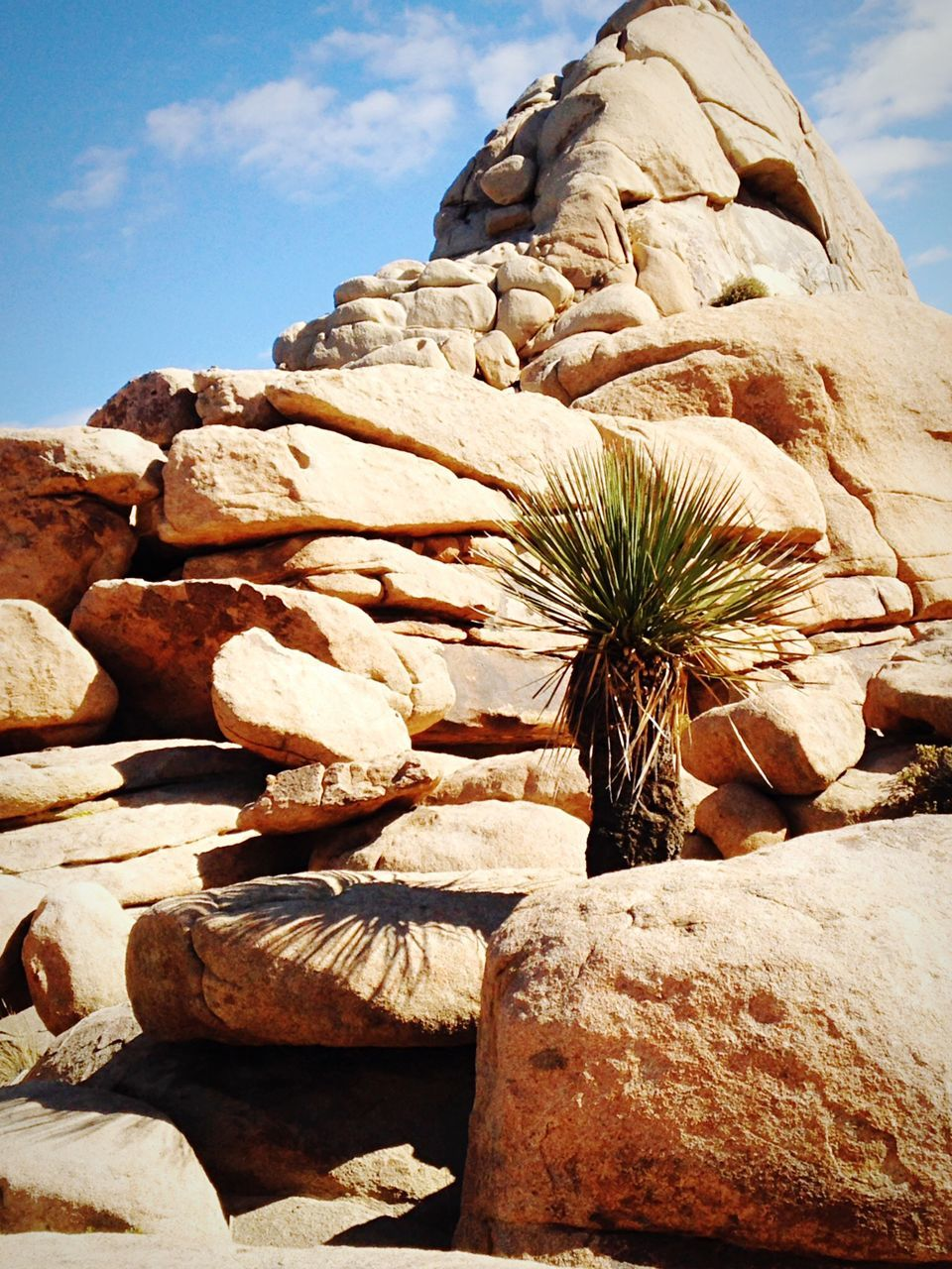 rock - object, nature, day, cactus, no people, outdoors, plant, physical geography, beauty in nature, growth, rock hoodoo, sky, close-up