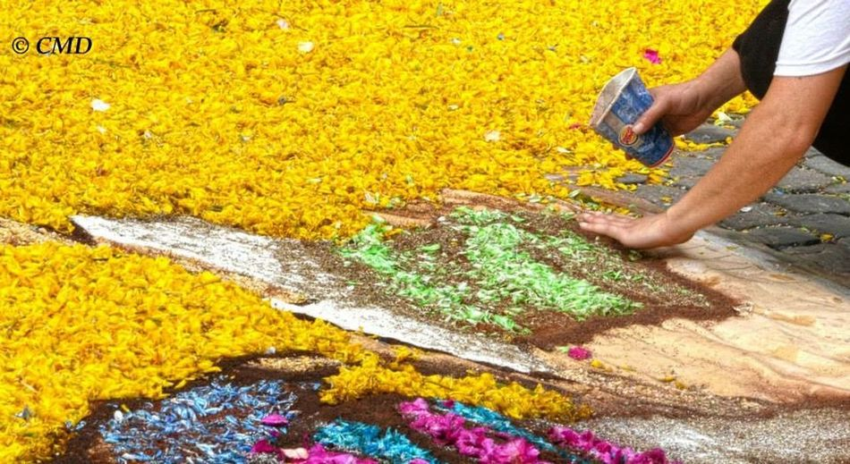 Genzano Infiorata Flowers Hands At Work
