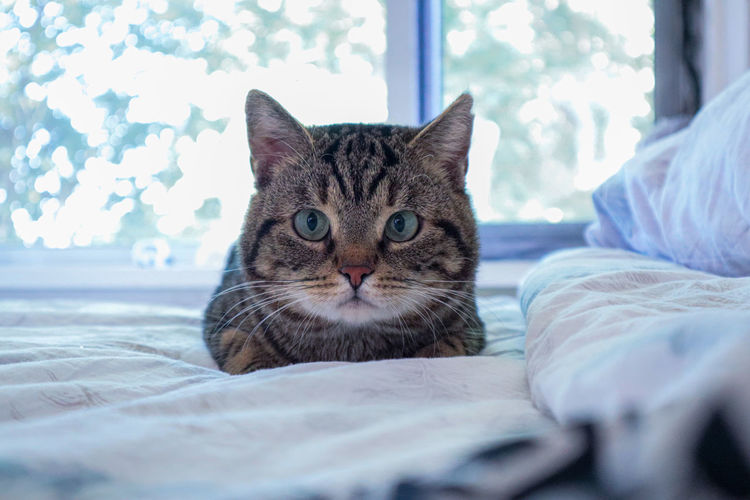 Portrait of cat relaxing on bed at home