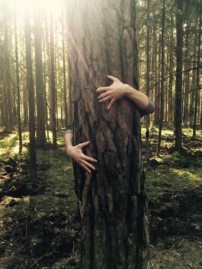 Tree Trunk Forest Tree Nature WoodLand Embracing Hugging Growth Day Gripping Outdoors Tranquility Pine Tree Arm Around One Person Human Hand Beauty In Nature Bamboo - Plant Naturelovers Inharmonywithnature Harmony Harmony With Nature Naturelover Worldearthday People