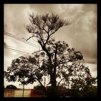 tarde em Big Field ...sera que.vai chover? Chovechuva Maroliphotografy Campograndems Chuvanolho .