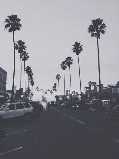 Newport avenue, San Diego Sandiego Sandiego_ca Palm Trees Newportavenue OceanBeach Beachtown Surf