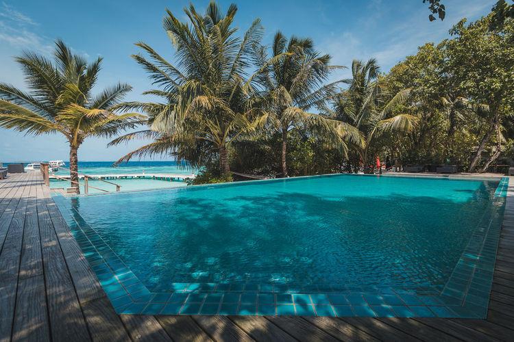 Palm Tree Water