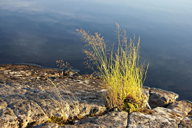 A Lake Shore In Finland A Peacefull Moment By A Lake Close-up Day Ecosystem  Evening Light By A Lake Hay On A Cliff Nature No People Outdoors Peace Of Mind. Plant