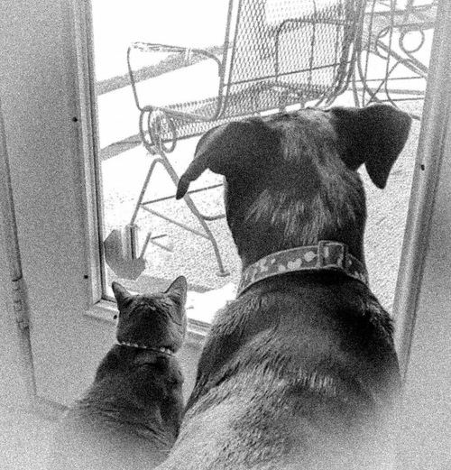 Dog Love Love ♥ Gooddoggy Catoftheday Catching A Show Cat Pets Men Women Sky Double Exposure
