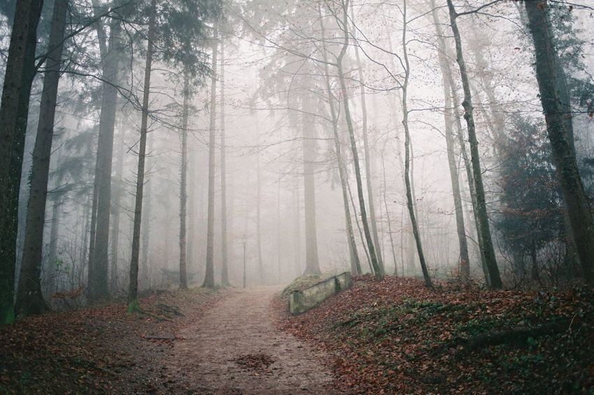 Analogue Photography EyeEmNewHere Film Photography Film Filmisnotdead Switzerland Zürich üetliberg Forest Fog Autumn Nature Tree Scenics Plant Day Landscape Beauty In Nature No People Outdoors