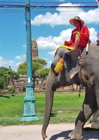 Snap A Stranger Thailand Elephant One Animal Sky Outdoors People Adventures In The City