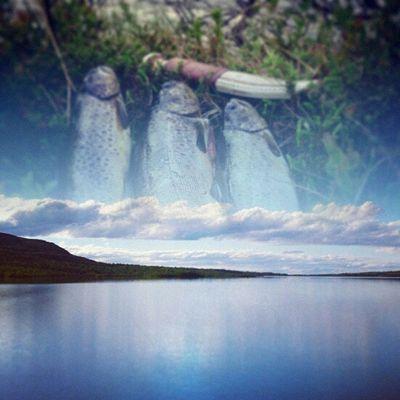 Great fishing in stunning nature! Glen Glensjön Glensfjällfiske Oviksfjällen öring Roding Fishing Fjällfiske Sapmi Bestofjamtland