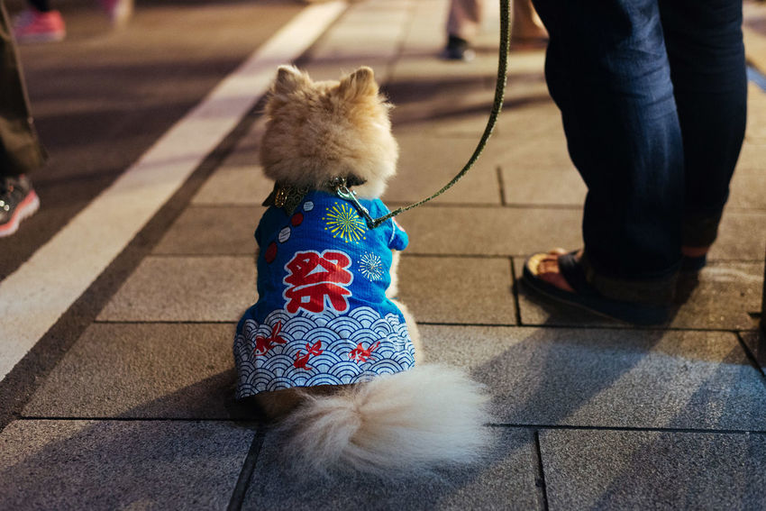 Furry Matsuri Adult Baby Stroller Day Dog Domestic Animals Human Leg Leisure Activity Low Section Mammal Men One Animal One Person Outdoors People Pets Real People Sitting Walking Warm Clothing