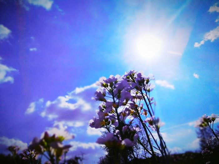My moment #photography #Nature  #relax #Mypassion #sunnyday #MyTime #mymoment Flower Head Flower Tree Springtime Blue Sunlight Branch Blossom Petal Sky