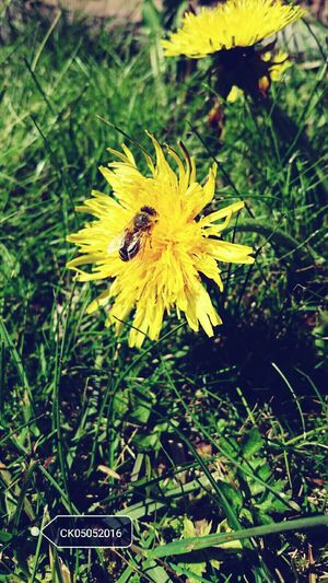 Green Nature Nature Photography Bee Life Love Taking Photos Enjoying Life Happy My Art Plant My Photography