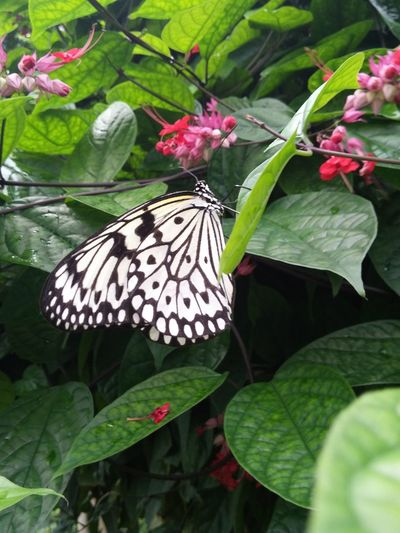 Papiorama de Fribourg🎉🎊🎉🎊Suisse Papillion Nature Annimals Forest Hello World Suisse  Photographie  LGG3