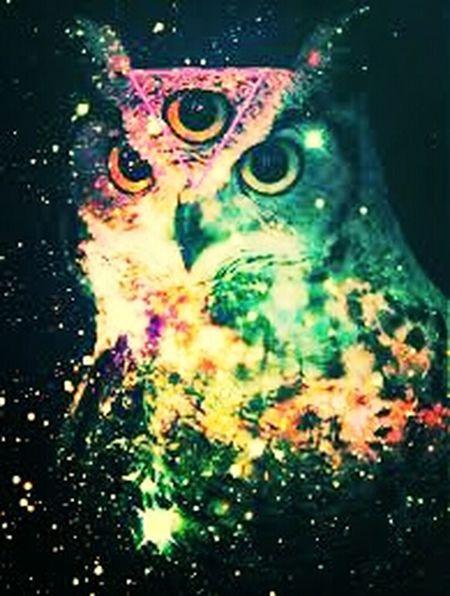 Phsycedelic Owl ThirdEye Trippy