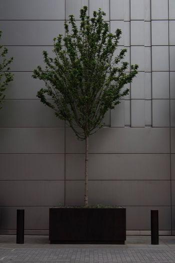City Contrast Plant Growth Tree Architecture Built Structure Wall - Building Feature Nature No People Footpath Outdoors Wall Day Flooring Tile Green Color Building Exterior Sidewalk Building Potted Plant Tiled Floor