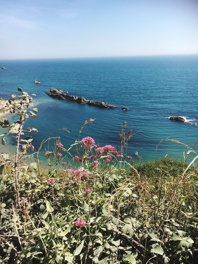 Beauty In Nature Tranquil Scene Sea Wildflower Seascape British Coastline Sunshine Flowers In The Foreground EyeEm Nature Lover