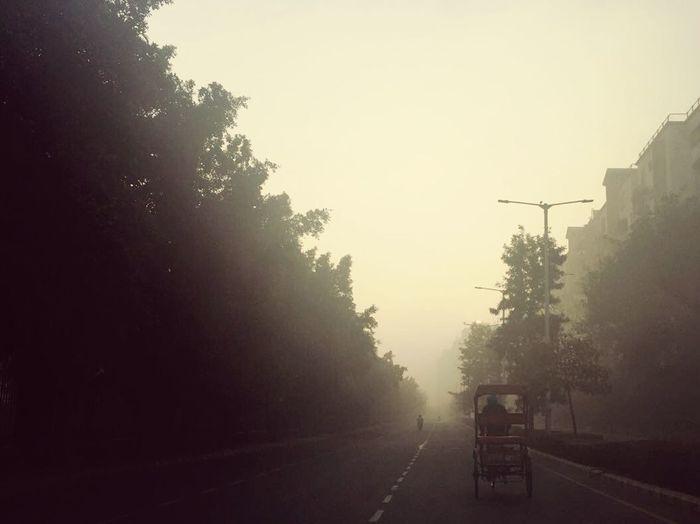 Fog Tree Sunset